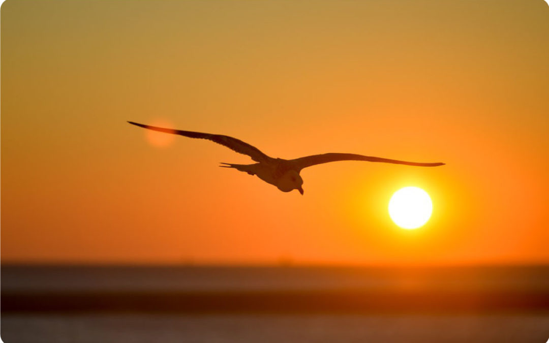 photo of Seagull over ocean